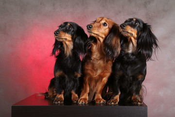 3 funny dogs