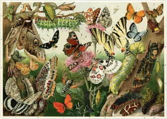 Various butterflies, moths, caterpillars and insect pests
