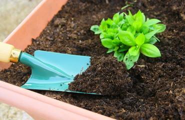 plantation de plante en bac pour terrasse