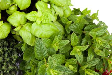 Thyme Mint Basil
