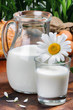 Pitcher of fresh milk with daisy