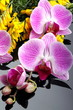 Orchidea con fiori di ginestra