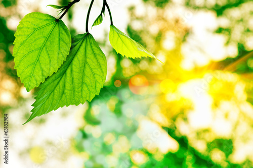 fresh green leaves on bokeh background