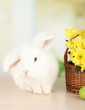 White cute rabbit and flowers in basket
