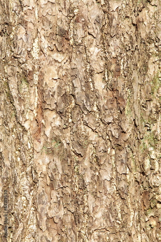 close - up texture and background of tree bark