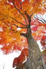 秋空を染める