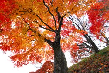 桜山公園の紅葉