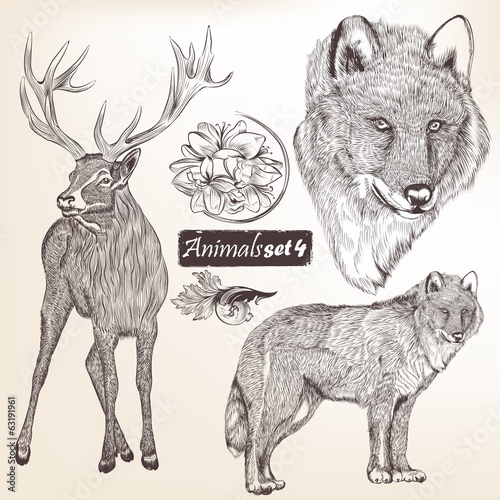 Set of vector hand drawn detailed animals for design