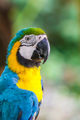 Parrot macaw.