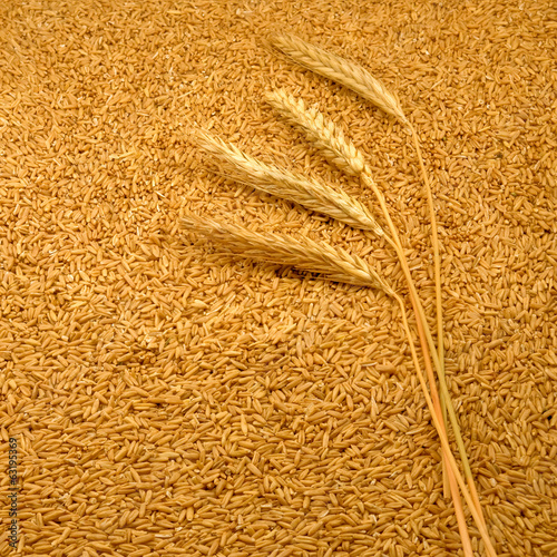 image of on wheat  on the seeds