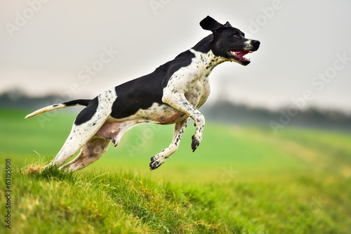 Working English Pointer