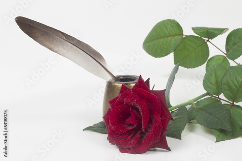 Rose on the white background