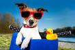 summer dog on bike