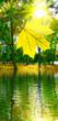 Leinwanddruck Bild - image of autumn leaf over water in city park