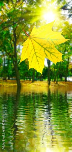 Leinwanddruck Bild image of autumn leaf over water in city park