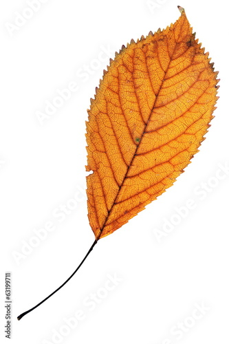 one leaf over white