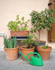 terrazzo con piante