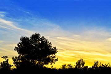 siluetas de arboles al amanecer