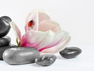 Zen stones with flower magnolia.