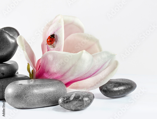 Zen stones with flower magnolia.