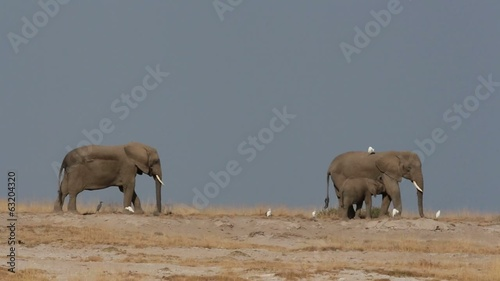 African elephants against a blue sky, Amboseli National Park