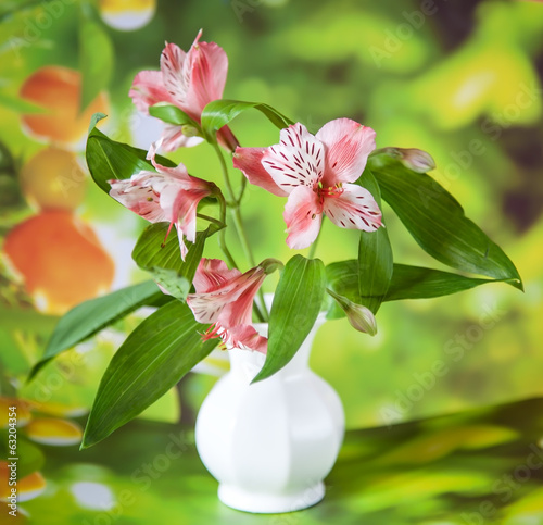 Beautiful alstroemeria lily flowers in white vase