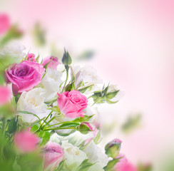 Bouquet of white and pink roses. Floral background.