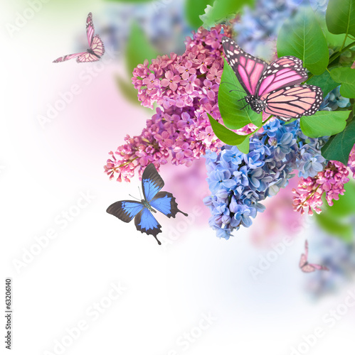 Deurstickers Lilac Branch of lilac blue and pink butterfly