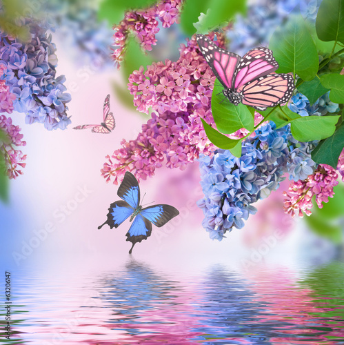 Fotobehang Lilac Branch of lilac blue and pink butterfly and water