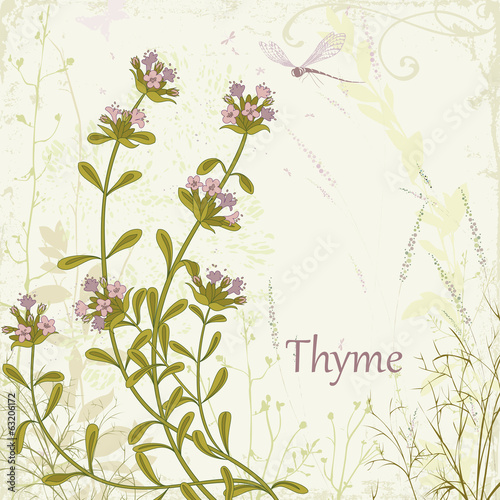 Thyme on floral background