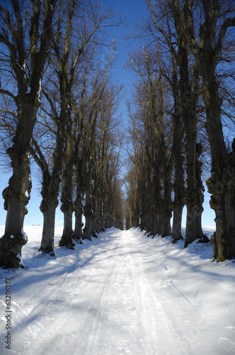 Pathway at winter