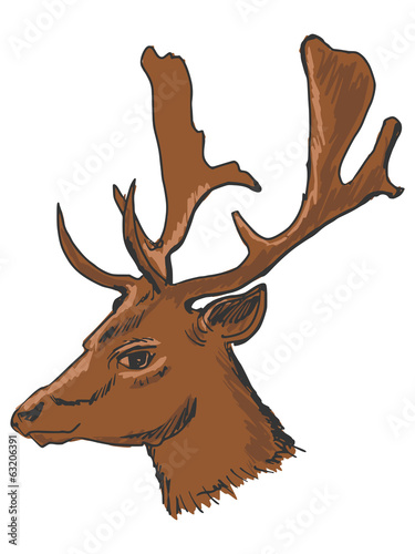 head of deer