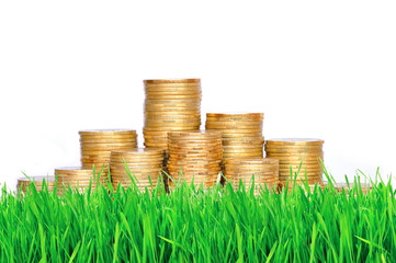 golden coins in green grass over white background