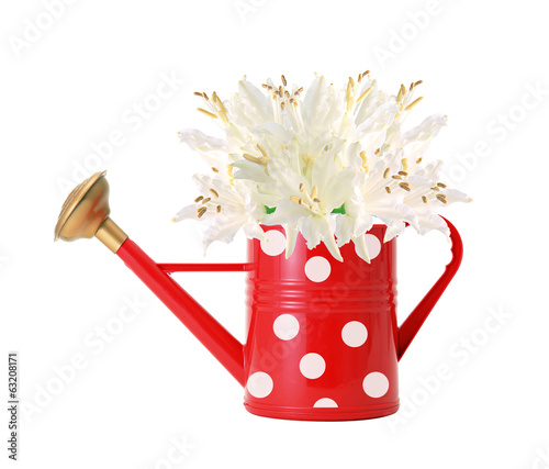 red polka dot watering can and white lilly isolated on white