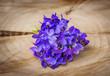 spring violets flowers