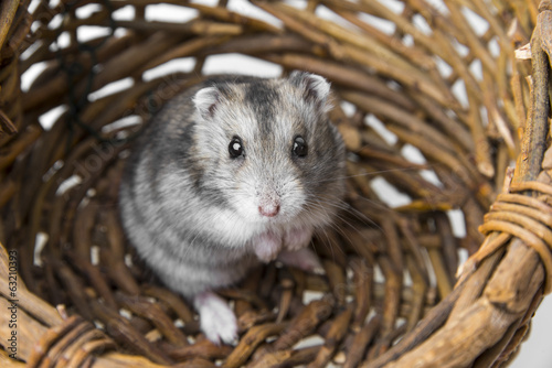 hamster in a basket