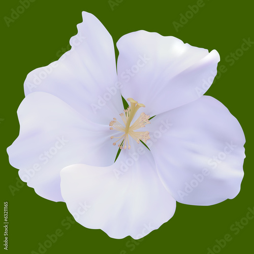 White Mallow. Isolated on Green. Vector illustration