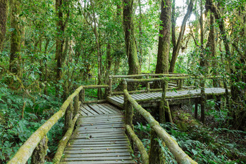 Wooden walkway in rain forest, Doi Inthanon national park, Chian