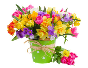 freesia and daffodil  flowers in blue pot