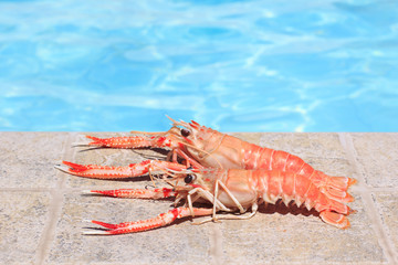 Two lobsters near swimming pool