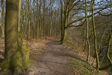 Footpath through a beech forest in spring
