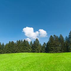 Sommerlandschaft mit grüner Wiese, Natur, Umwelt