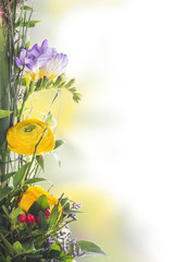 floral border of buttercups, freesia, berries,isolated