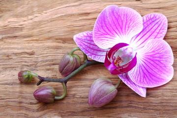 Orchidea con boccioli