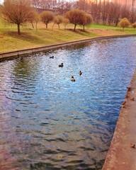 Утки на городском канале