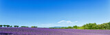 Fototapety Panoramic view of lavender fields in Provence, France