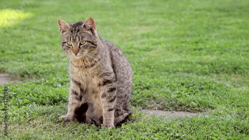 Domestic cat on a spring grass and leaving on the end