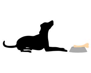 Hund füttern