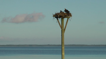 Currituck Sound with osprey nest