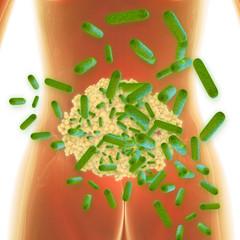 Helicobacter - 3d Render